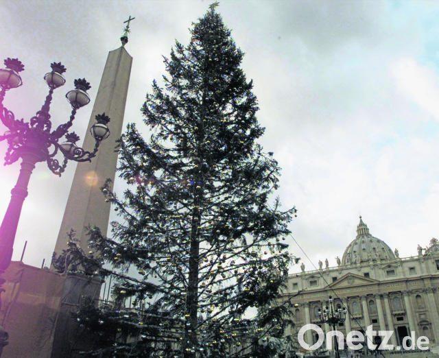 Weihnachtsbaum Berlin Lieferung.Ein Weihnachtsbaum Für Den Papst Onetz