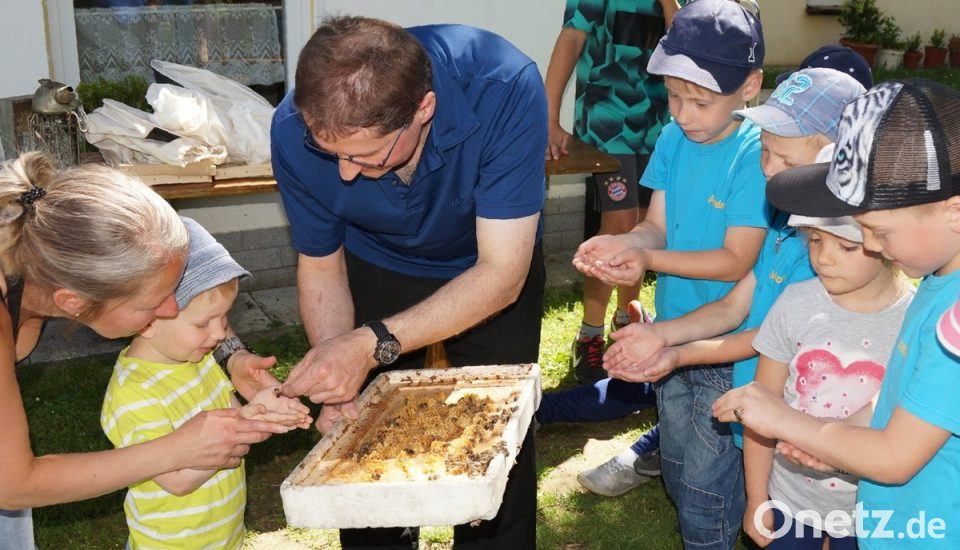 Kompass Führt Bienen Zurück Onetz
