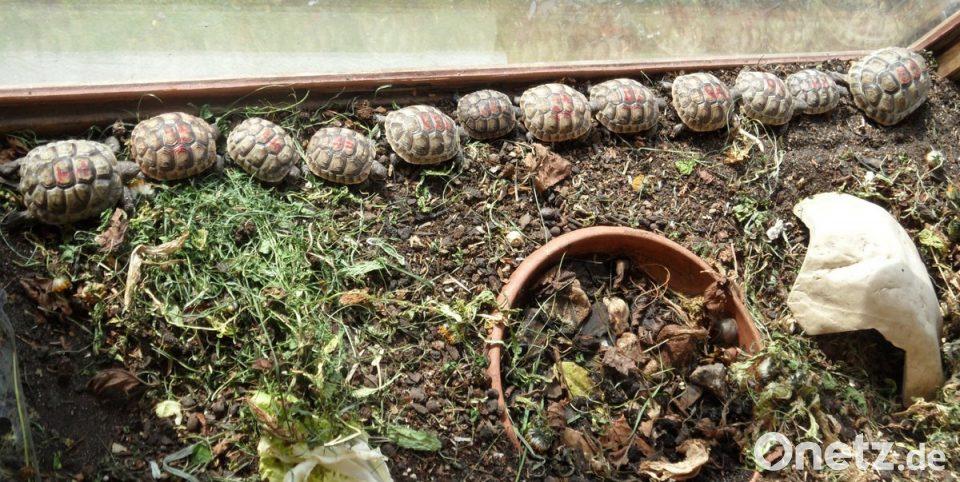 Kleiner Kühlschrank Für Schildkröten : Schildkröten sehnen sich nach wärme onetz