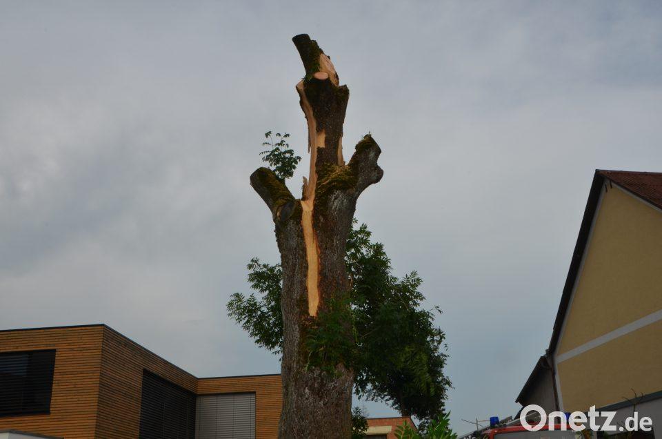 Klettergerüst Um Baum : Winterschnitt von obstbäumen das manufactum gartenjahr
