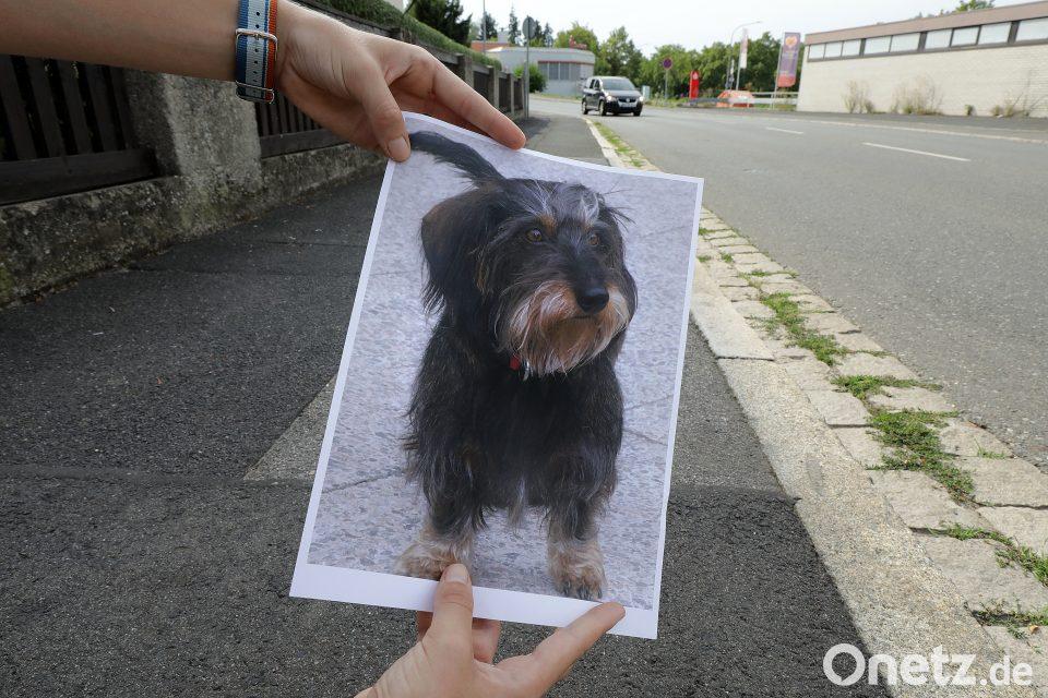 Aggressiv Gegen Hund Und Menschen Onetz