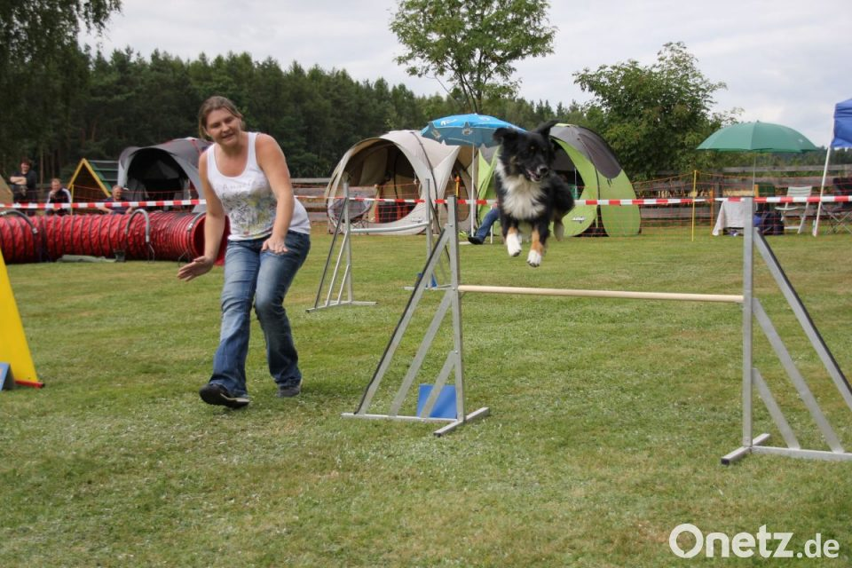 66463ffaec4367 Der Hund läuft im Parcours frei (ohne Halsband und Leine) und wird  ausschließlich durch Hörzeichen und Körpersprache geführt.