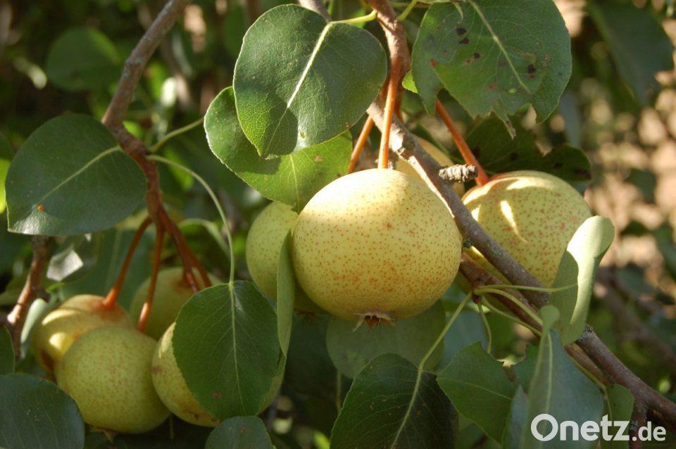 früchte bestimmen
