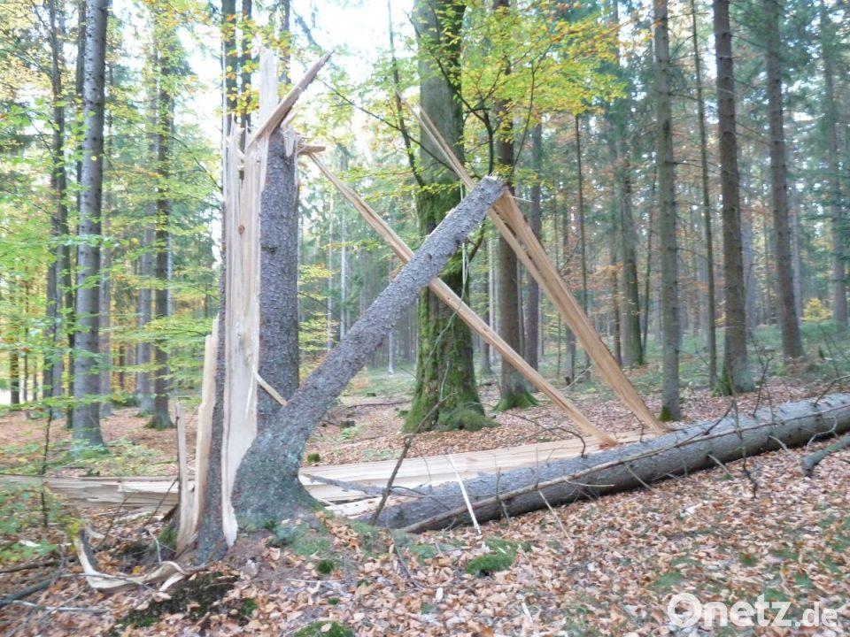 Holzpreis Im Keller Onetz