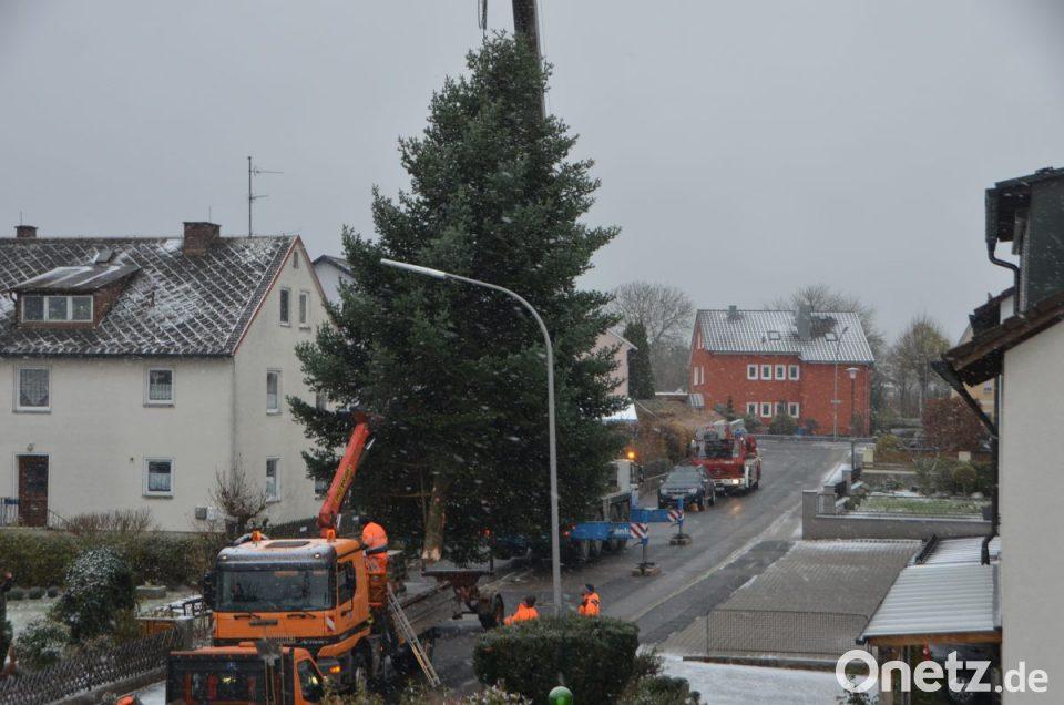 Lisas Erster Weihnachtsbaum.Kranwagen Hievt Vohenstraußer Weihnachtsbaum Onetz