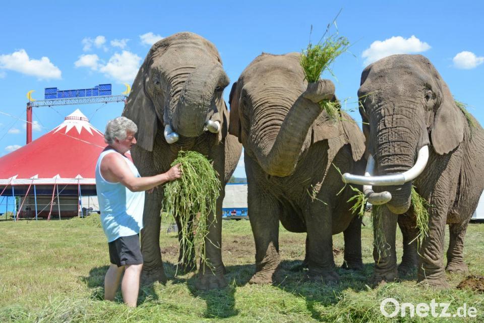 Circus Afrika Schlägt Zelte Auf Onetz