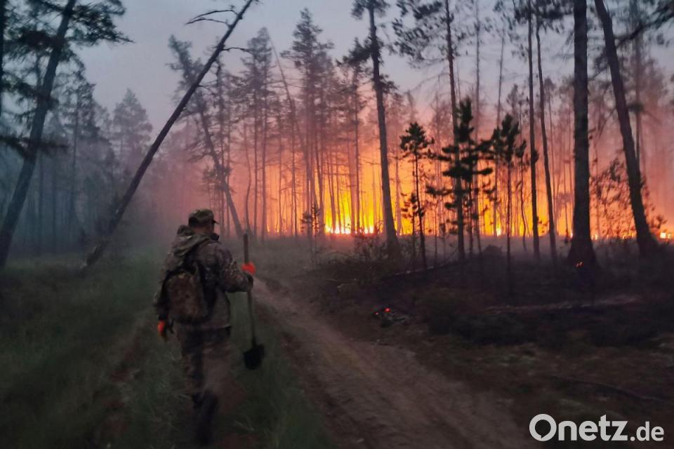Umweltschützer: Waldbrände in Russland - historisches