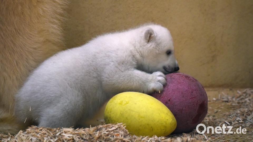 Spielzeug Für Den Baby Eisbär Onetz