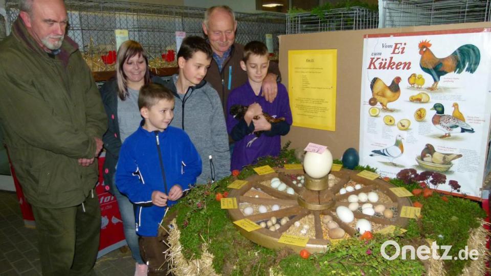 Ausstellung der Oberviechtacher Kleintierzüchter mit über 400 Tieren - Onetz.de