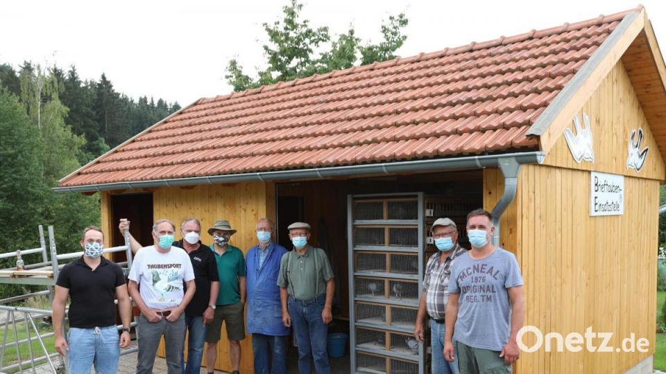 Durchwachsenes Jahr für Nabburger Brieftaubenzüchter
